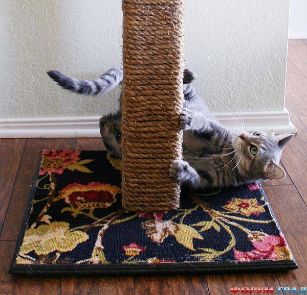 Лотки для кошек своими руками