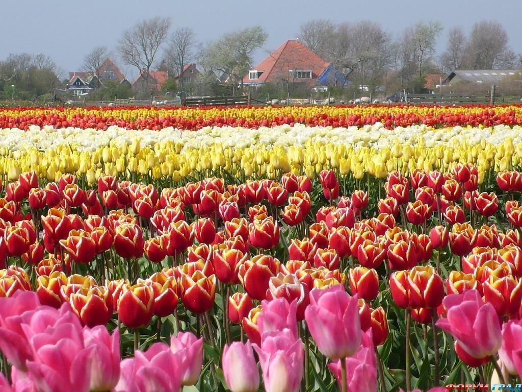 Цветник возле Голландских юрт
