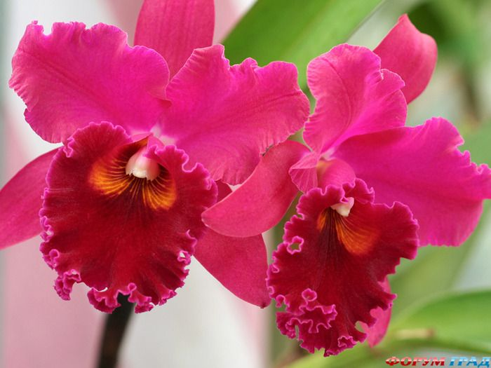 Фото Цветы Орхидеи