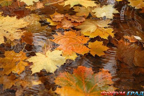 Слова песни про осень
