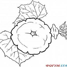 Детские раскраски овощи