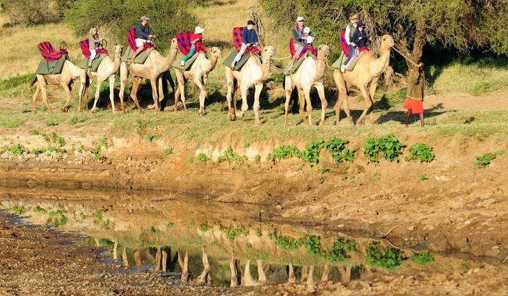 Караван верблюдов возле отеля Loisaba