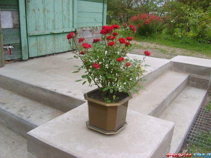 Фото растения цветы болотные цветы с
