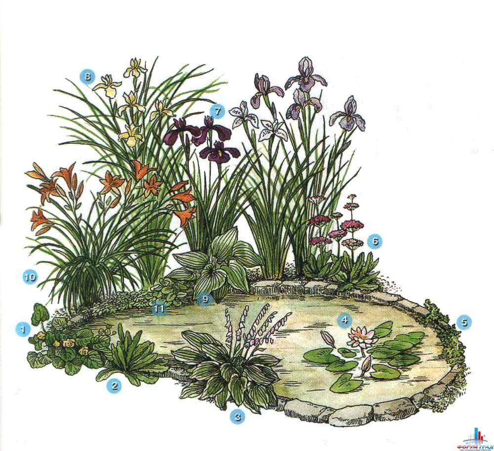 произрастания растений: