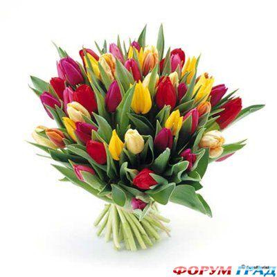 Цветы на 8 марта какие дарят