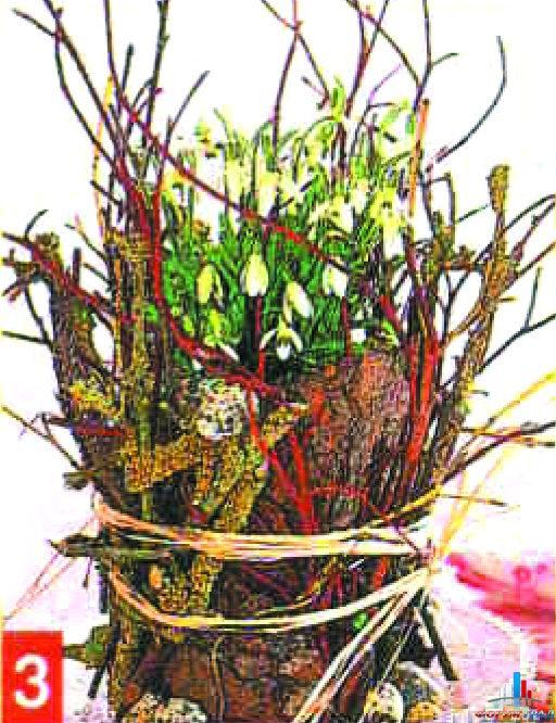 Семейство кактусовых в картинках