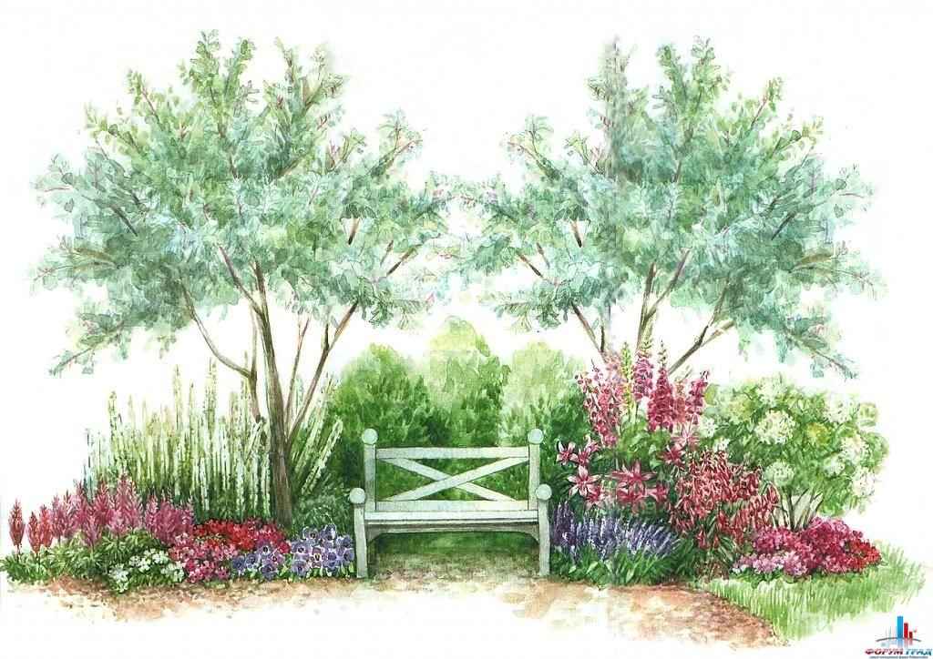 Схема цветника.  Используемые растения: 1. Яблоня культурная- Malus domestica.  2. Гортензия пепельная - Hydrangea.