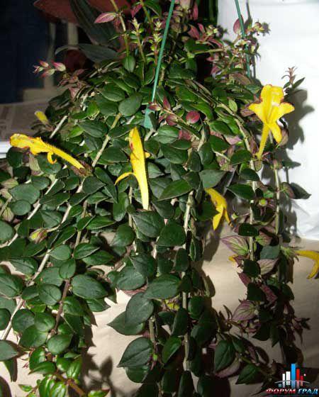 Комнатные растения с мелкими цветами