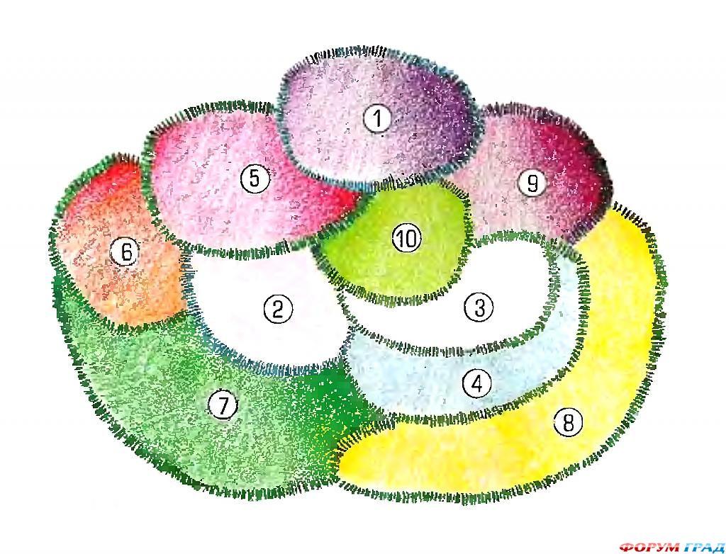 голтвые схемы и проекты цветников и миксбордеров