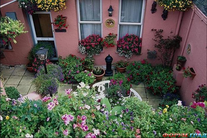 Перед домом алисы распустились необычные цветы