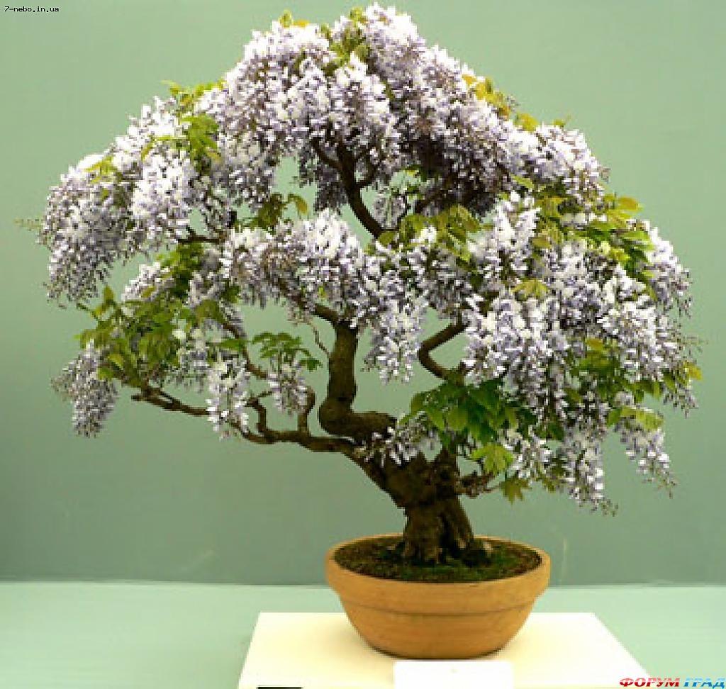Бисероплетение деревья