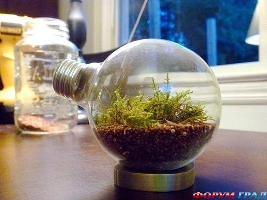 Флорариум в лампочке  пошаговая инструкция