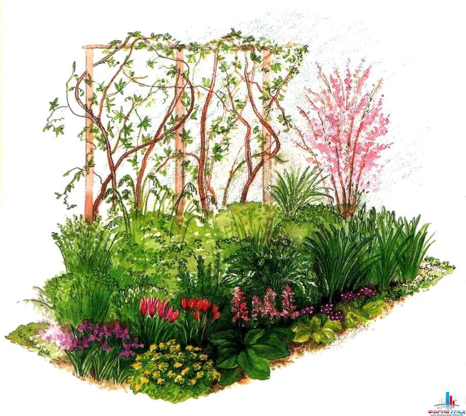 Схема цветника: