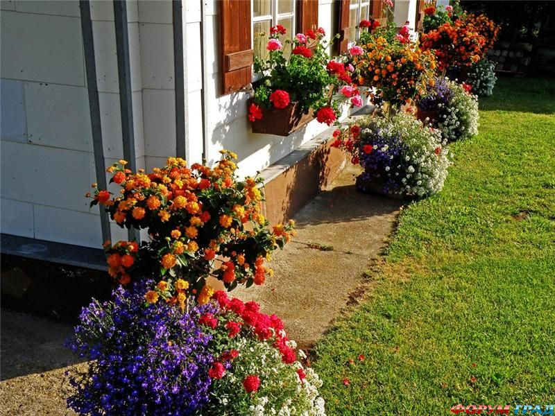 Цветы на балконах - фото-град.