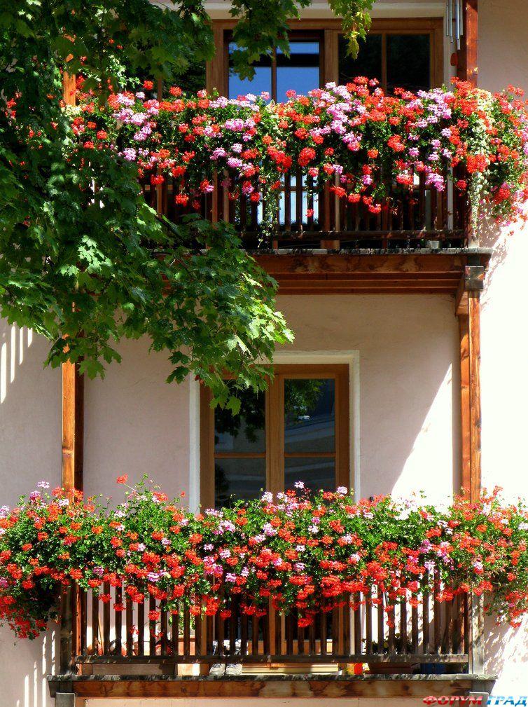 В европе окна все в цветах - у россиян восторг в глазах - дл.