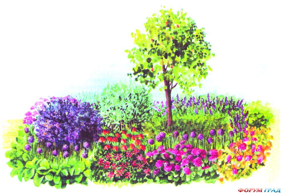 Схемы цветника с мальвой