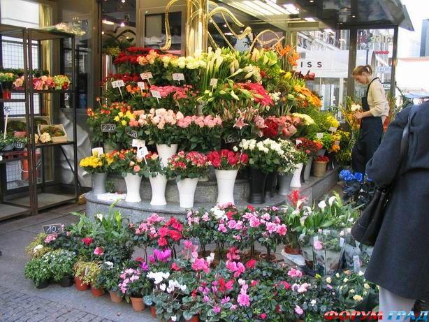 С чего начать цветочный бизнес - выгодно ли открыть
