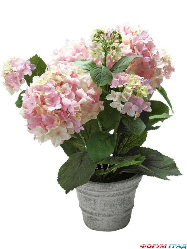 Цветы живые фото в горшках
