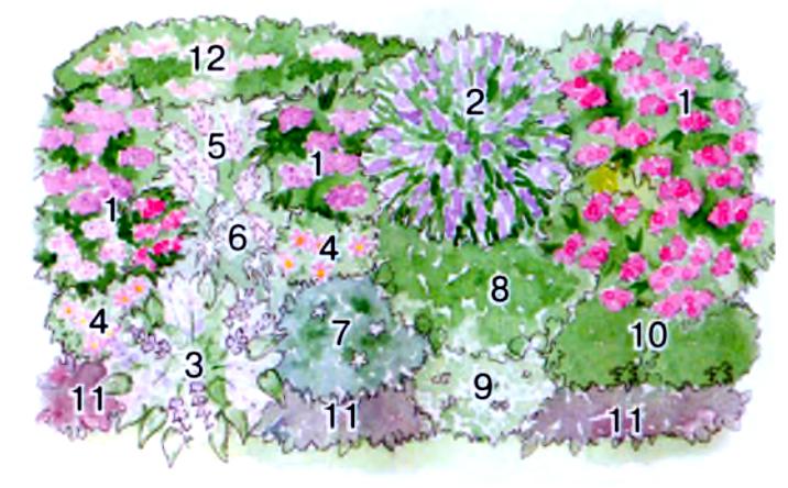 Используемые растения:
