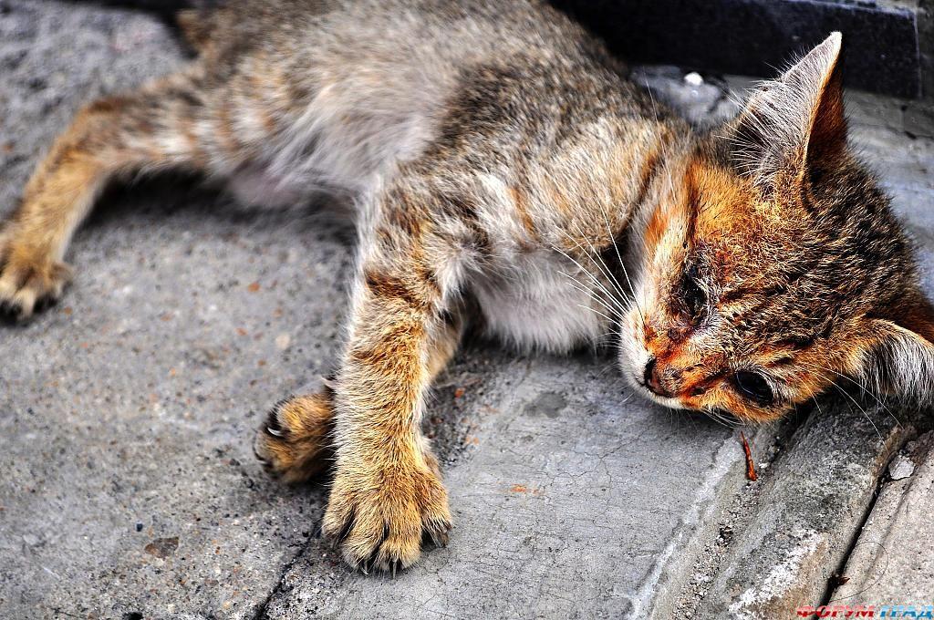 отдых Саратове аудио запись уродливый кот рождения