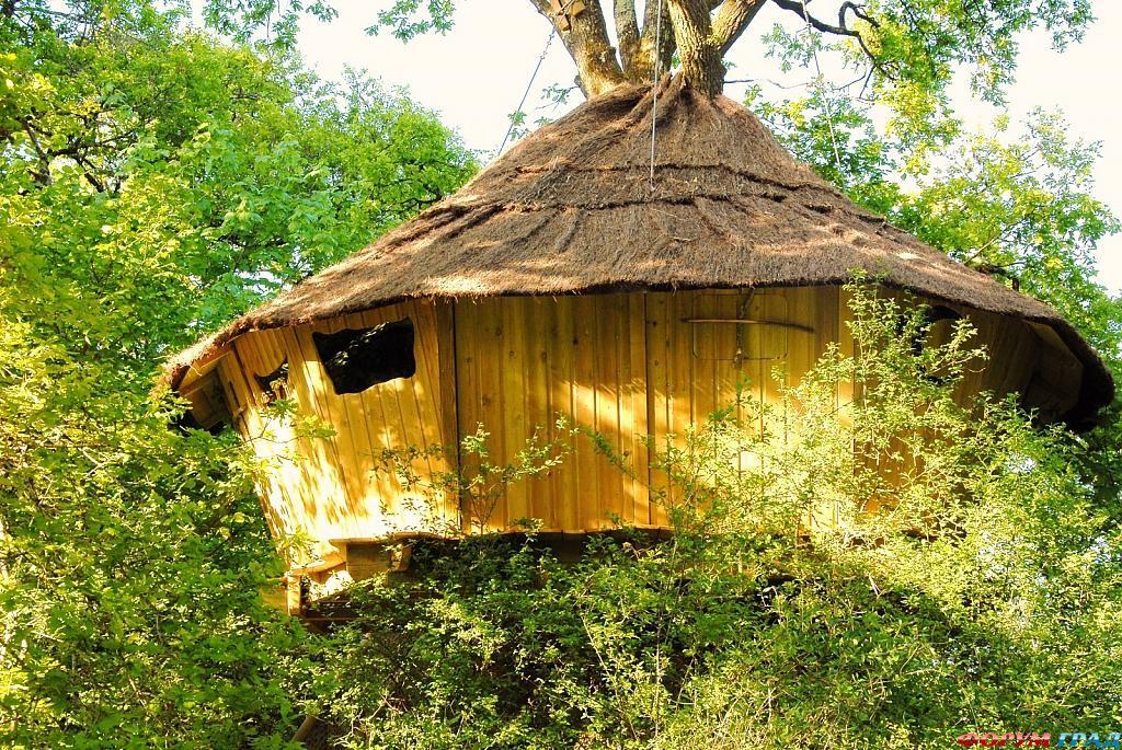 Отель Tree Houses Alicourts