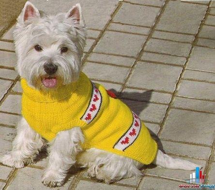 Для такого собачьего свитера