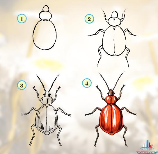 Поэтапное рисования жука