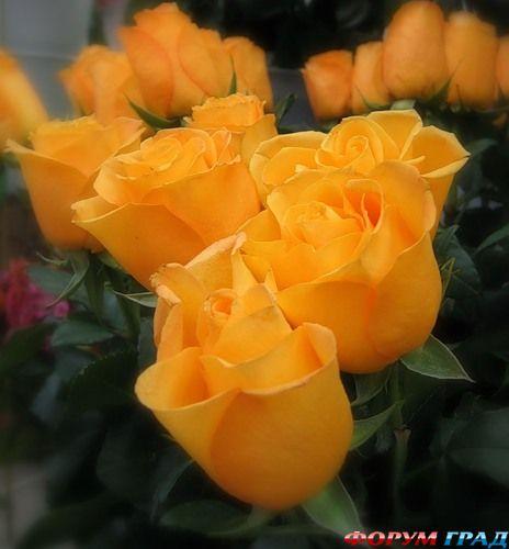 Сделать букет роз своими руками фото 269