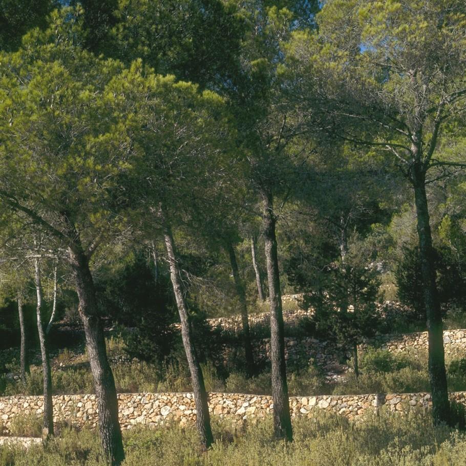 Вилла на Ибице с роскошной террасой и большим бассейном