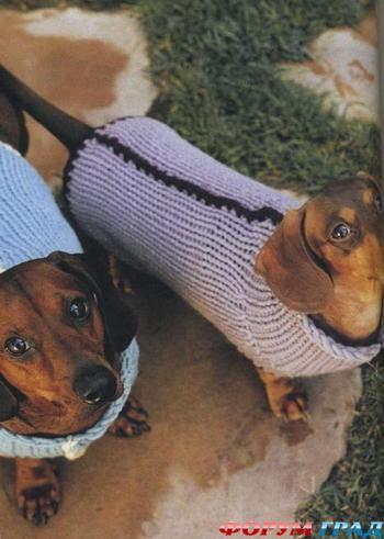 вязанием для собак