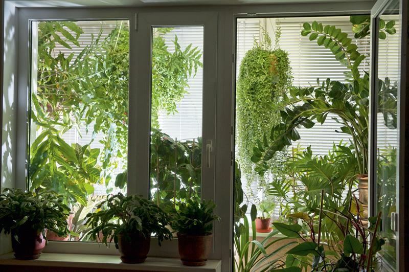 Сад на балконе - место, где душа отдыхает!.