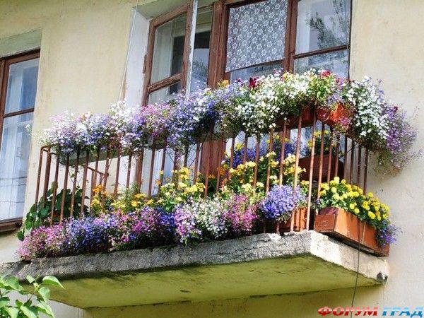 Красота спасает мир: цветы на балконе многоэтажки как всепоб.
