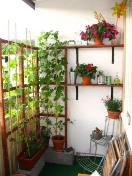 Сад на балконе - полезные рекомендации профессиональных флор.