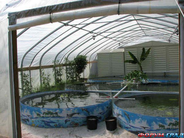 Дена: технология выращивание форели в узв
