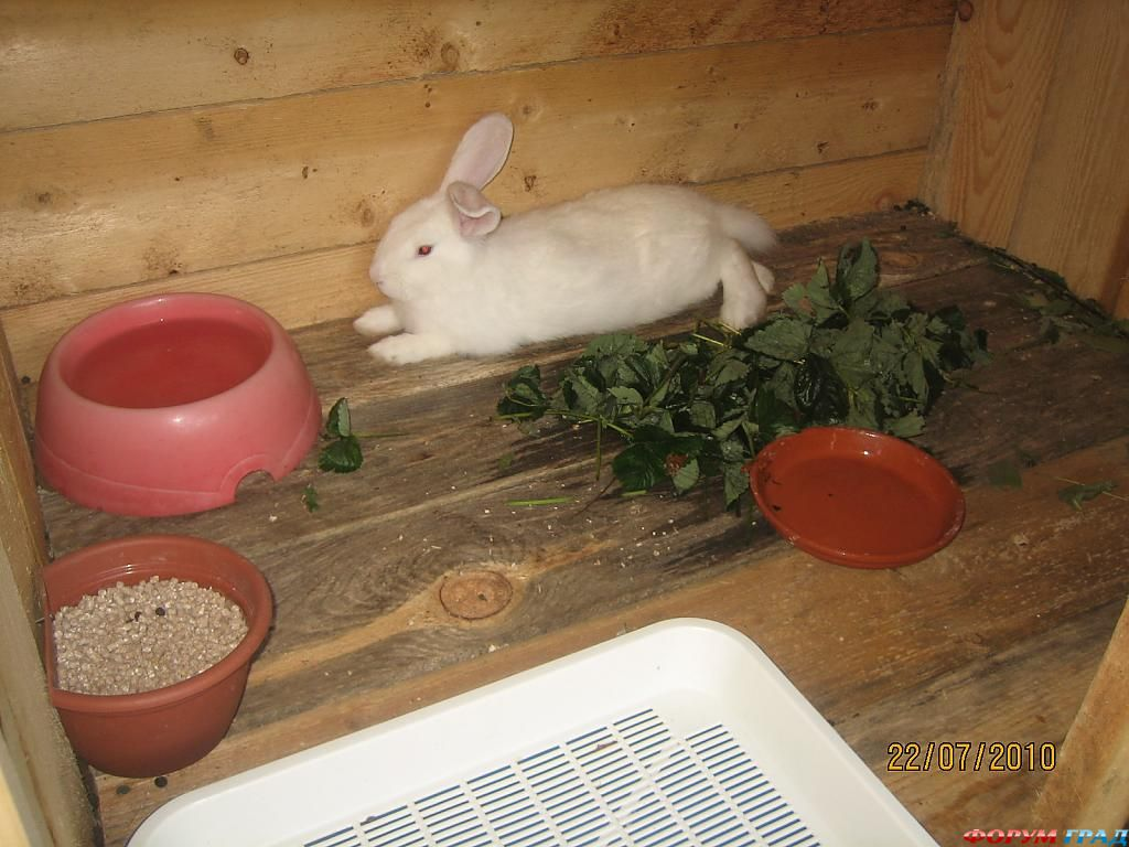 Клетки на балконе для кроликов своими руками