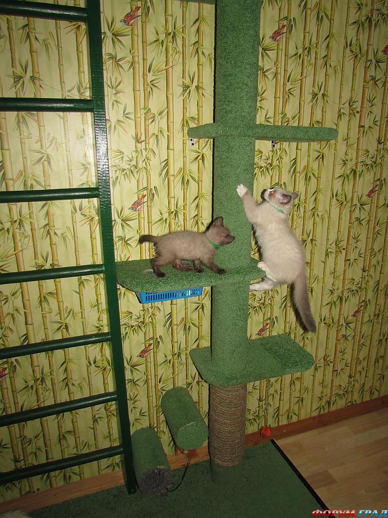 Когтеточка для кошки своими руками на стену 45